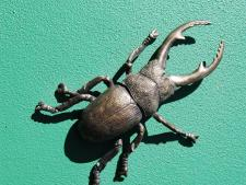 bronze beetle randwick